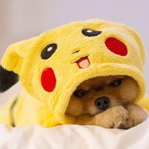 Pokémon Pikachu hondenpakje kattenpakje